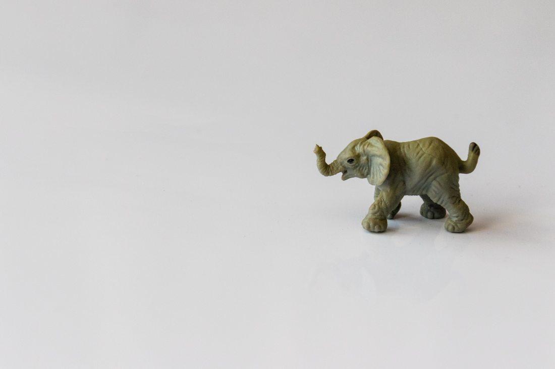 animal-art-baby-1289845